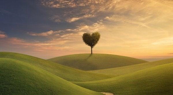 Groen veld met daarin een boom in de vorm van een hart