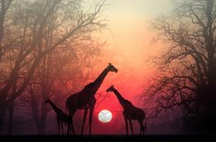 Een mooi Afrikaans verhaal! Hoe geef je je ziel de tijd om jou in te halen?