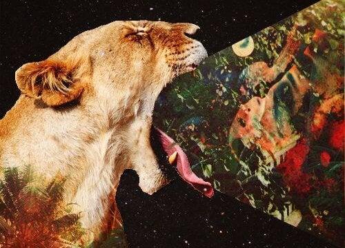 Leeuw die het universum op eet
