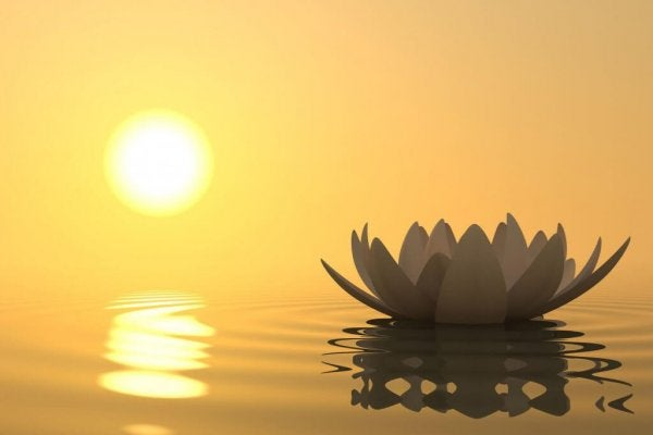 Waterlelie bij zonsondergang