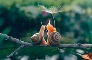 Twee slakjes als symbool voor de slow-movement