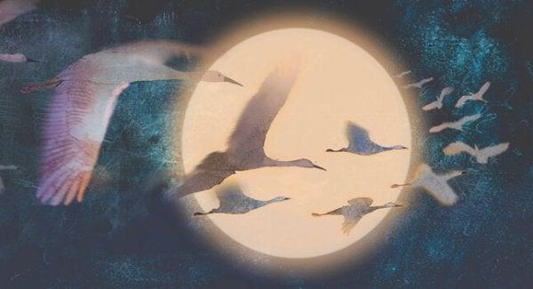 Vogels vliegen langs de maan