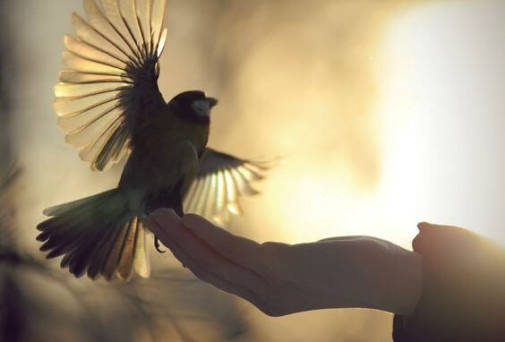 Een vrije vogel want de citaten van Osho gaan over vrijheid