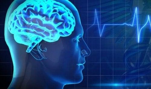 Vijf van de slechtste voedingsmiddelen voor je hersenen