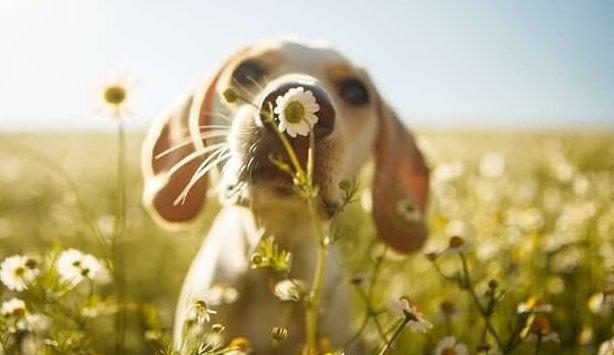 Hond die aan een bloem ruikt