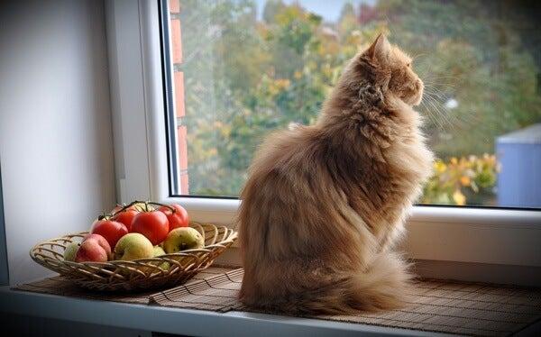 Kat die vanaf de vensterbank uit het raam zit te kijken