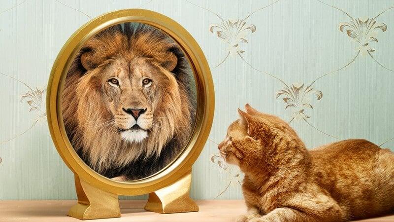 Kat ziet leeuw in spiegel