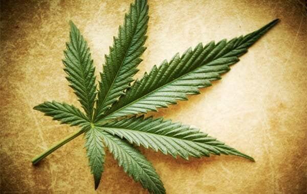Mythes, waarheden en halve waarheden over marihuana