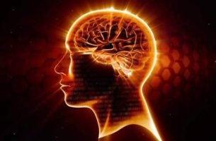 Wat zijn omega 3-vetzuren en waarom zijn ze goed voor de hersenen?