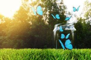 Pot waar blauwe vlinders uit vliegen, misschien wel de gelukspot
