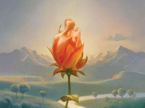 Roos die in de bloei komt