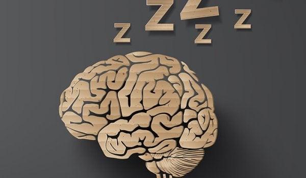 Wat gebeurt er in de hersenen wanneer we slapen