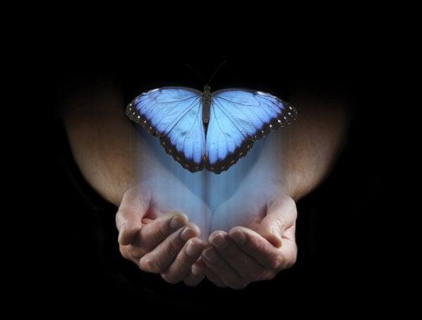 Vlinder vliegt uit handen