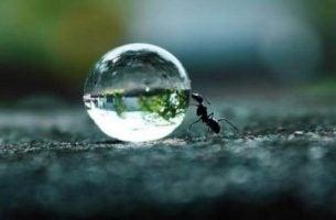 Mier die een grote druppel regen vooruit duwt en zo zijn doorzettingsvermogen laat zien