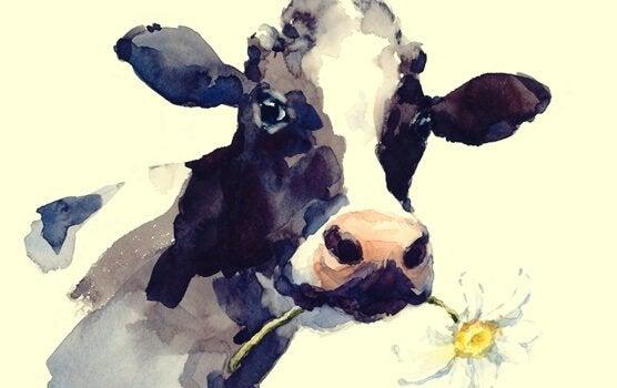 Het verhaal van de koe, voor als je routine je beperkt