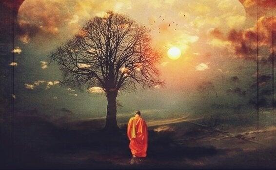 Boeddhistische monnik in een bos
