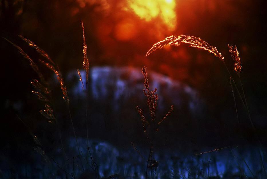 Grassprietje bij zonsopgang