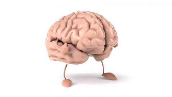 Hersenen met armen en benen