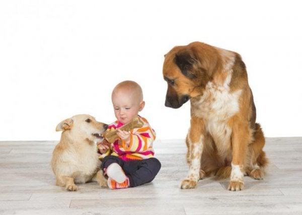 Hond is jaloers op baby