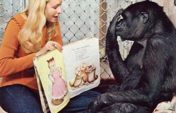 Het verhaal van Koko en hoe deze gorilla zijn kennis opdeed