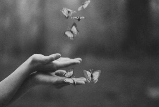 Twee handen waar vlinders op afkomen want het gaat over het vlindereffect