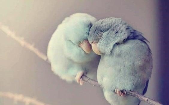Twee kleine vogeltjes die elkaar warm houden