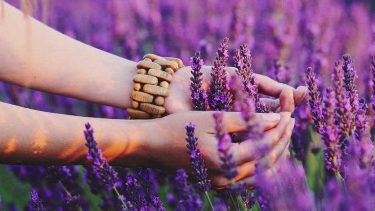 Vrouw plukt lavendel en weet hoe ze moet waarnemen vanuit het hart