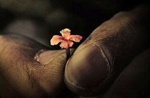 Kleine bloem die groeit zonder grenzen