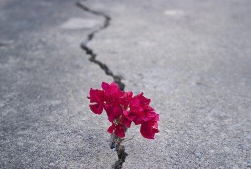 Bloem groeit uit een scheur in de weg