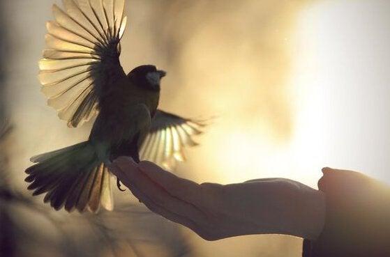 Vogel zit op een hand
