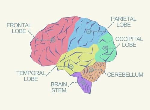 Uitzonderlijke hersenen