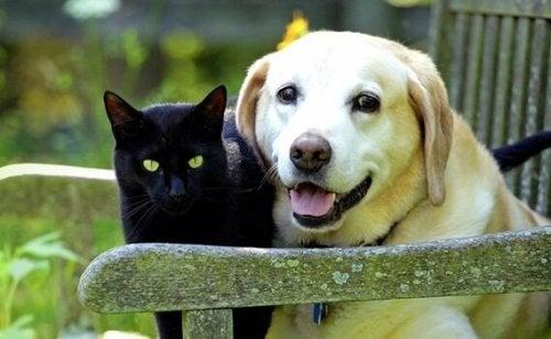 Rouwen om een huisdier: het verlies van een geliefde vriend