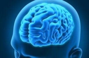 Neurologische aandoeningen: hersenen