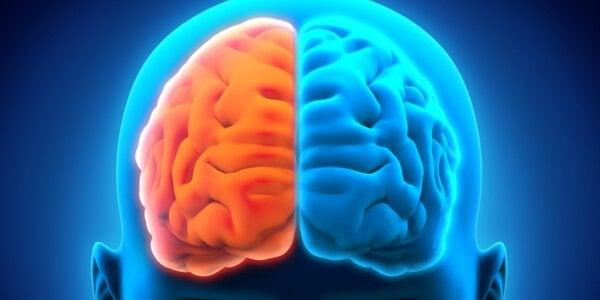 De twee hersenhelften