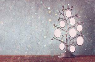 Een stamboom