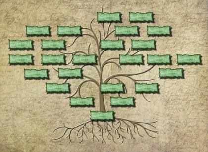 Voorbeeld van een stamboom