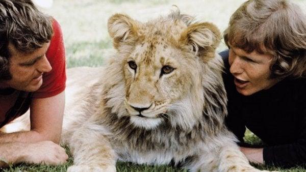 Het hartverwarmende verhaal van de leeuw Christian