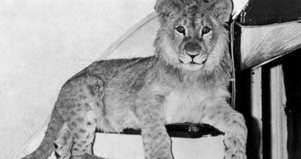 De leeuw Christian