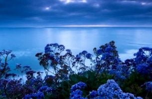 Zeelandschap in de stressverlichtende kleur blauw