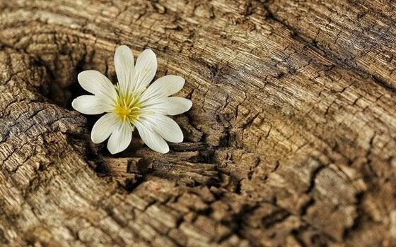 Bloem groeit uit boomstam