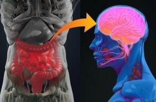 Een gezonde geest begint in de darmen: psychobiotica