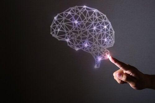 De hersenen en de wetenschap van geluk