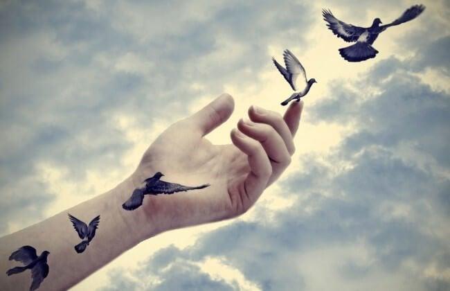 Vogels uit de hand