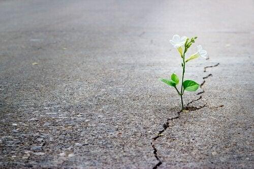 Plant groeit door asfalt heen