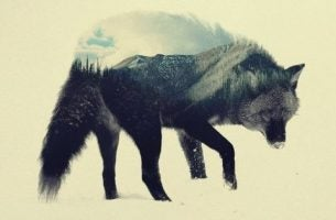 De steppewolf van Hermann Hesse