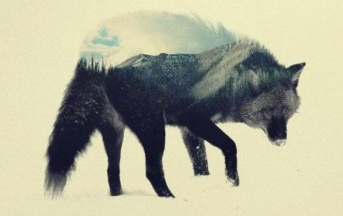 De steppewolf: een boek om je te helpen reflecteren