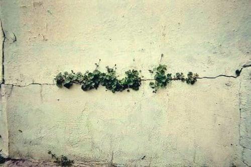 Onkruid dat groeit in een spleet van de muur