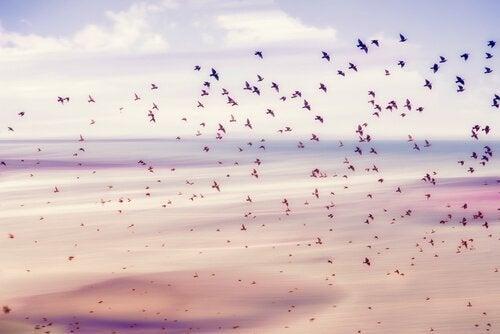 Vogels die vrijheid vertegenwoordigen
