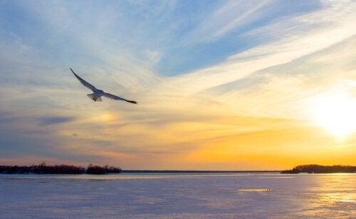 Jonathan Livingston Zeemeeuw: geloven in jezelf