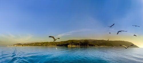 Zeemeeuwen die over een eiland vliegen